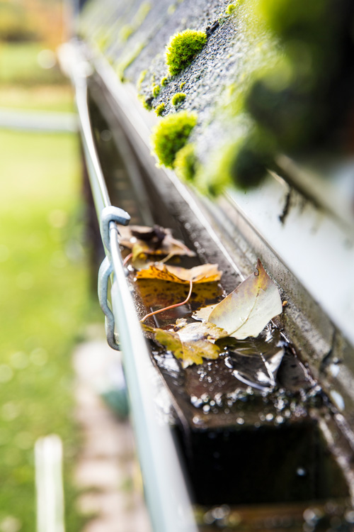 moss damaging roof tiles and gutter debris and leaves clogging up downspouts